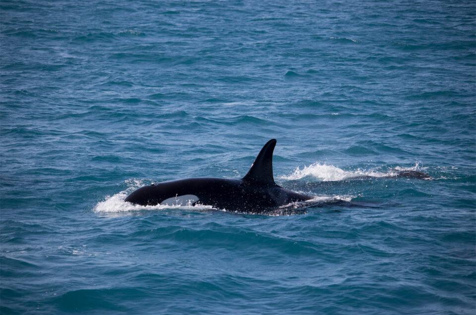 Kaapverdie Sal orka zee
