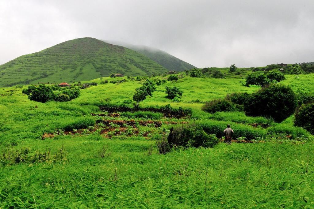 Groen landschap op het Kaapverdische eiland Fogo