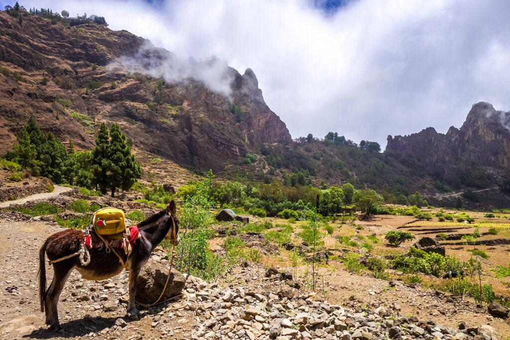 Een muilezel kijkt uit over de vallei op het eiland Santo Antao in Kaapverdië