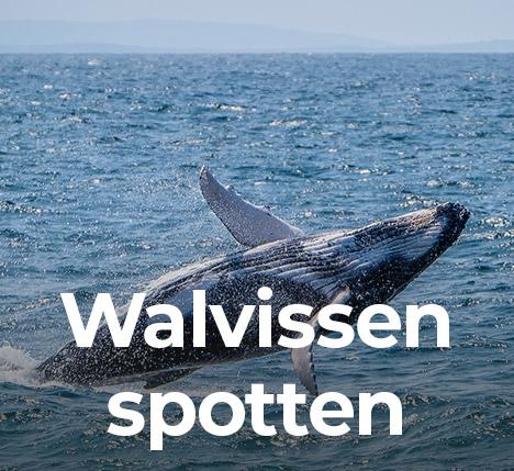 Excursie Kaapverdië walvissen spotten
