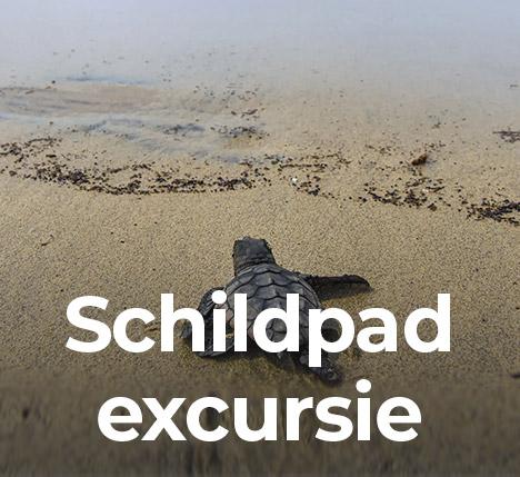 Schildpadden excursie Kaapverdië